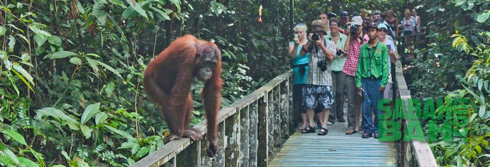Sepilok Orang Utan Rehabilitation Centre is a popular stop on the Sandakan Wildlife Day Tour